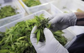 Taking marijuana is good for health