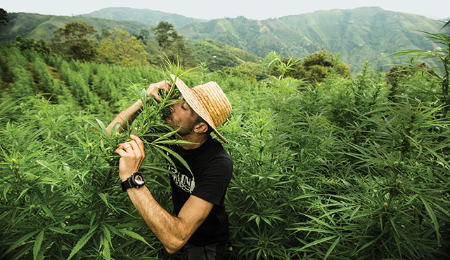 4 important facts that we never know about marijuana