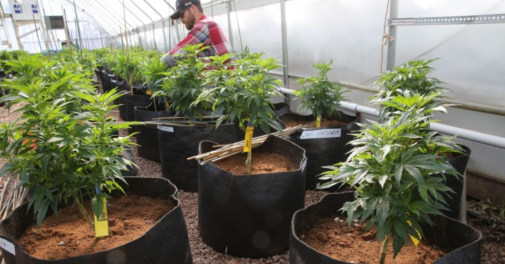 Annual Marijuana sales in Colorado to approach $900 Million