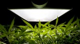 The legalization of marijuana has opened new prospects in many fields