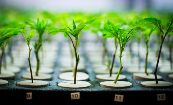 Rapidly Advancing Technologies in the Marijuana Industry