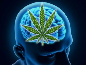 The Positive Effects of Marijuana on the Elderly Brain