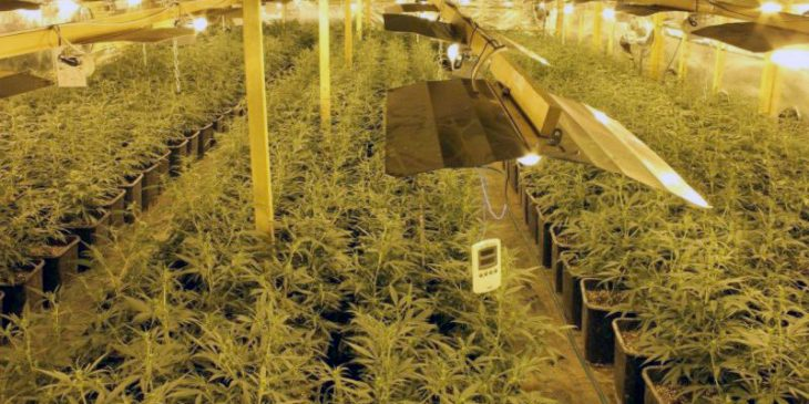 Why Choose to Grow Marijuana Indoors