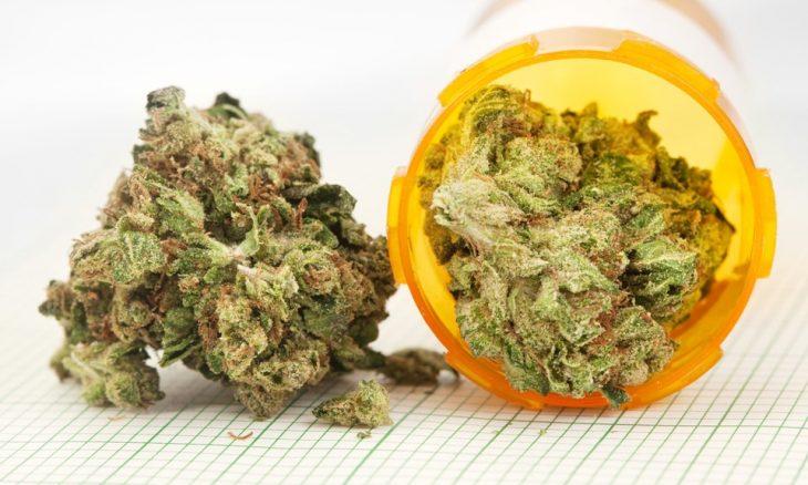 Marijuana Plants for Tourette Syndrome