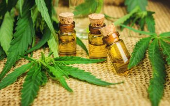 cannabis for treatment (decoction, tincture, extract oil).