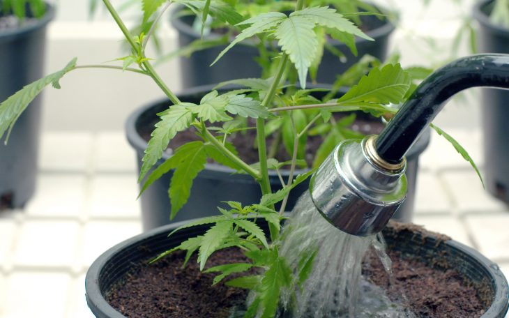 How Often to Irrigate