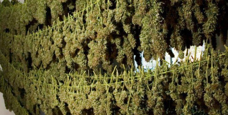 how to dry weed buds