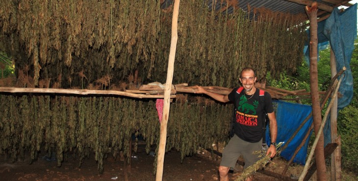 [cml_media_alt id='2642']how to dry weed[/cml_media_alt]