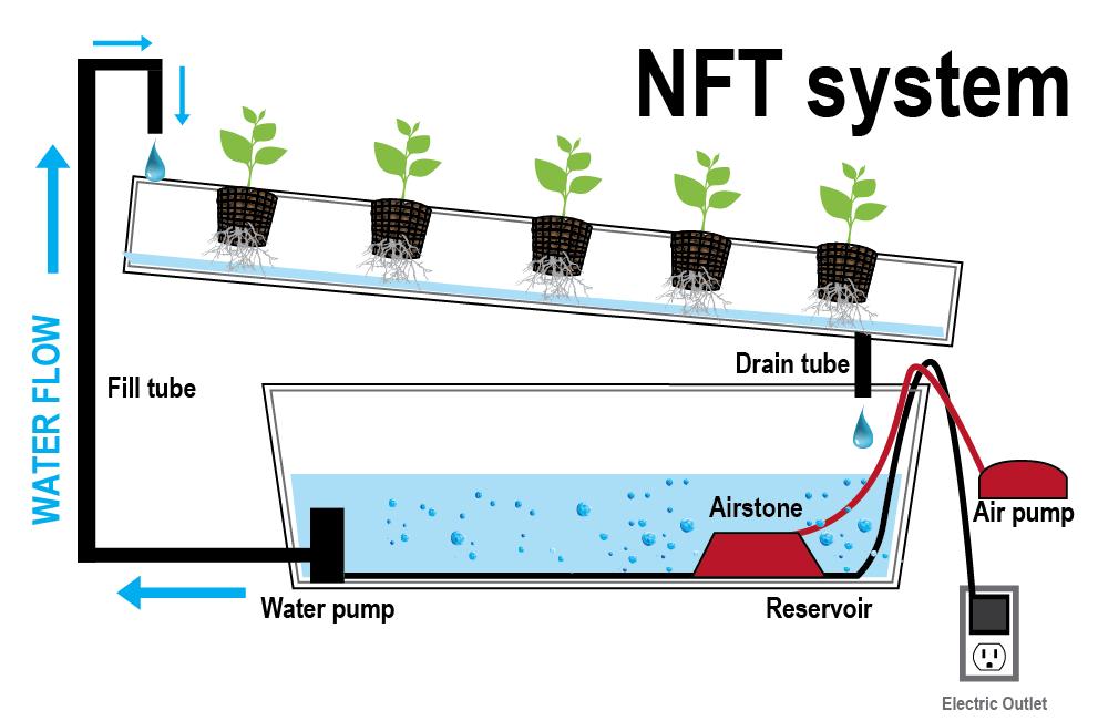 cultivo hidroponico nft