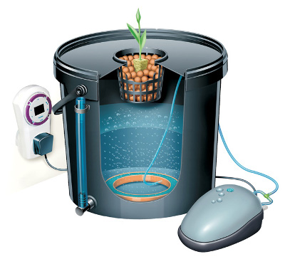 [cml_media_alt id='2924']hydroponic grow DWC[/cml_media_alt]