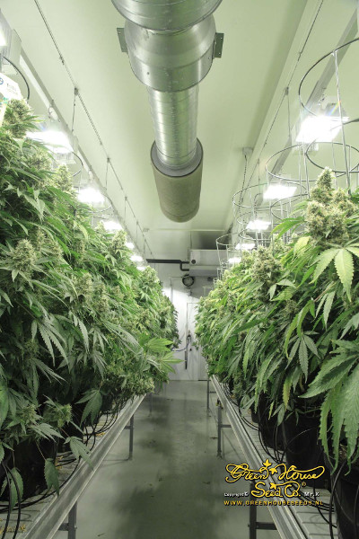 [cml_media_alt id='2931']hydroponic grow room[/cml_media_alt]