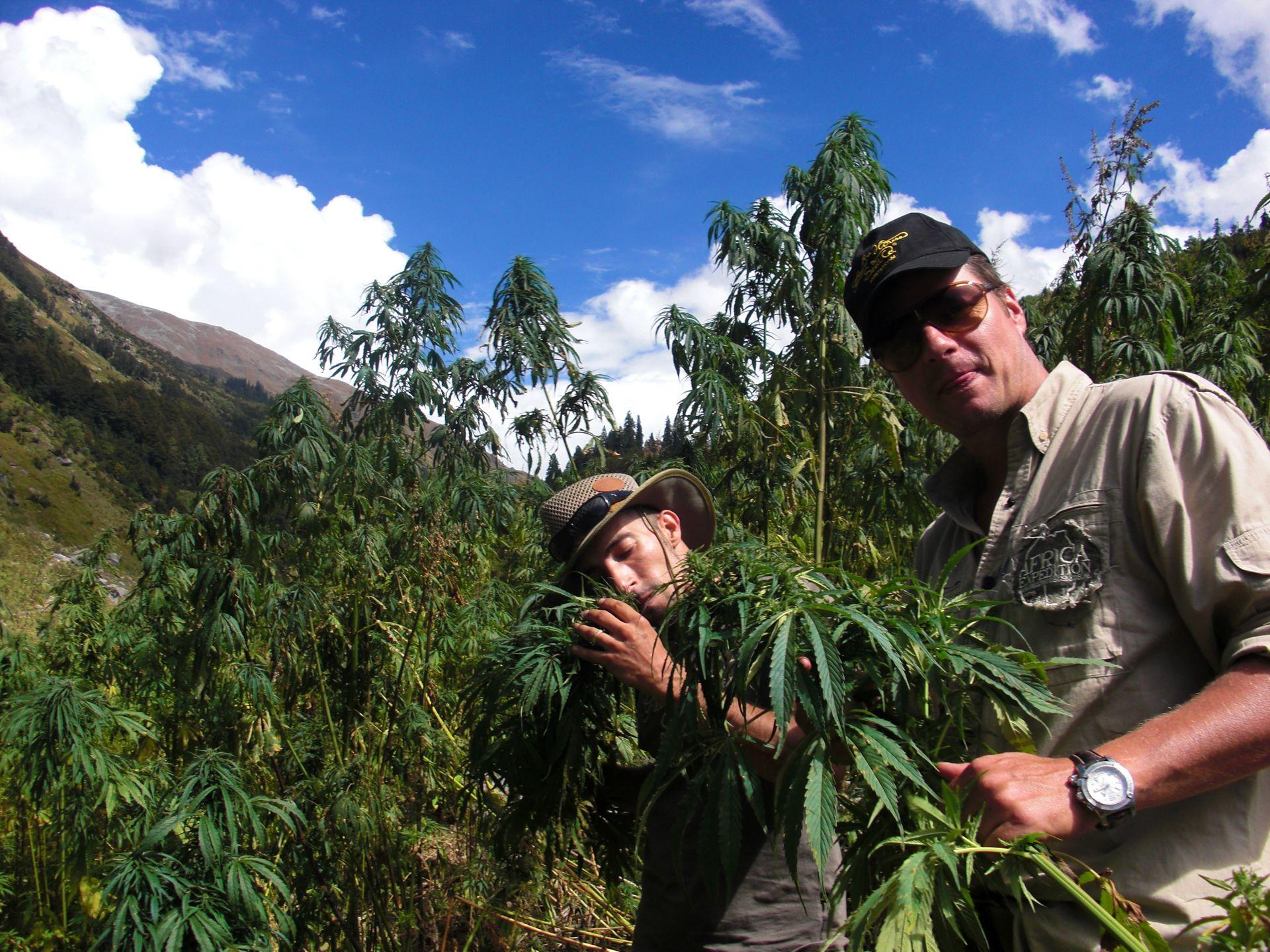 how to make money from marijuana in canada legl