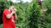 More Marijuana