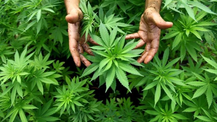 Marijuana Is Just a Plant.