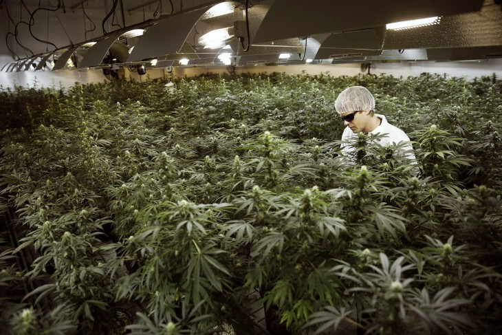 Marijuana companies are ready to invest in high tech infrastructure to produce cannabis