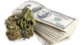 Investment in Marijuana Stocks can generate heavy profit
