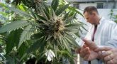 Marijuana can cure cancer- the fact is approved by the national cancer institute