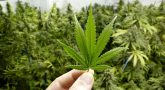 Illinois Considering Marijuana Legalization for a Financial Boost
