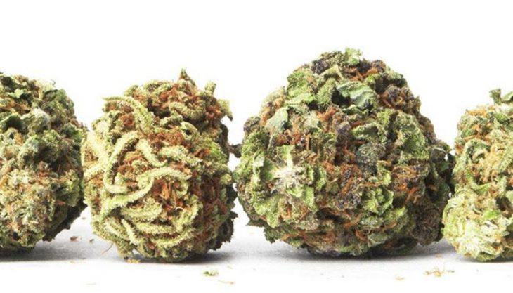 How to Rehydrate Dry Marijuana Buds?