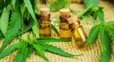 What do you understand from Cannabis Oil?