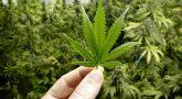 What to Do to Keep your Marijuana Farming a Secret