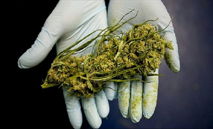 How Would You Spot Moldy Cannabis?