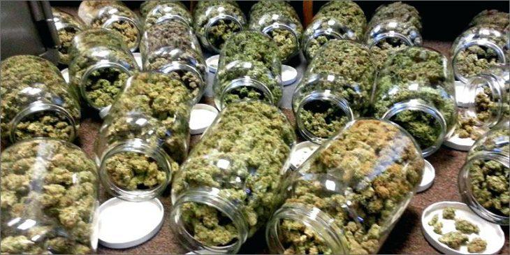 Cannabis in Netherlands