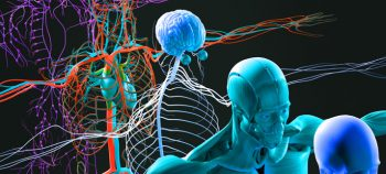 Understanding the Effects of Cannabis Usage on the Human Body