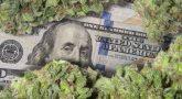 Do you Think Marijuana Legalization would Increase its Demand
