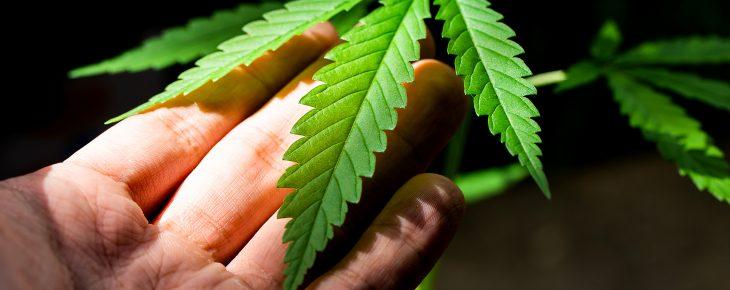 5 Best Tips To Overcome Marijuana Crop Smell