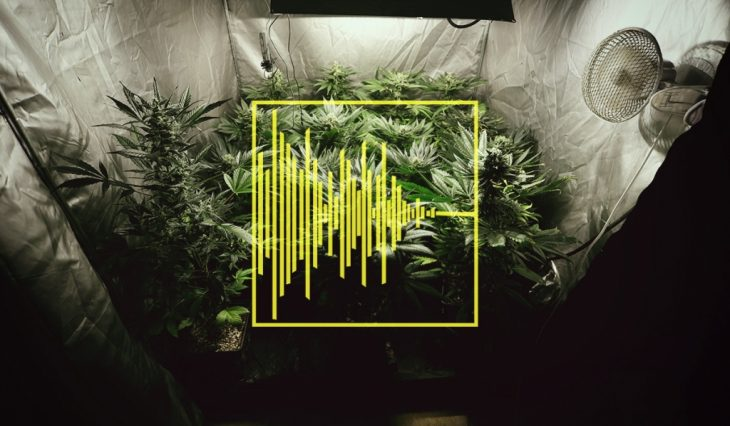 Soundproofing Techniques For Indoor Cannabis Cultivation