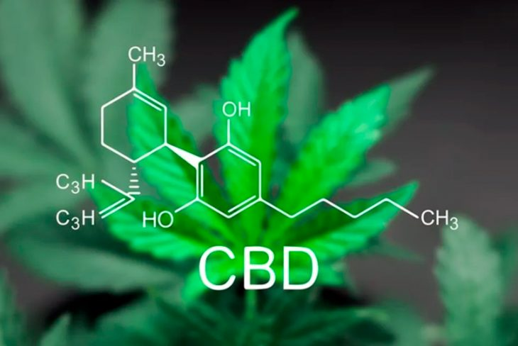 THC or CBD – What's the Better Option?