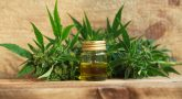 Use this Guide when Choosing a Cannabis Oil