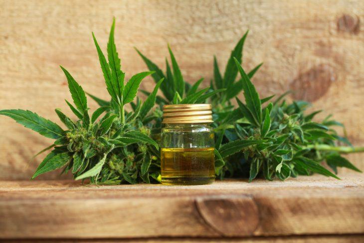 Use this Guide when Choosing a Cannabis Oil