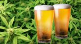 Cannabis Beer How Promising Is It for Cannabis Users