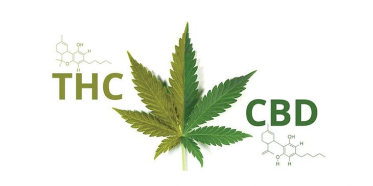 THC and CBD – What's the Deal With Them and Which of the Two is Better?